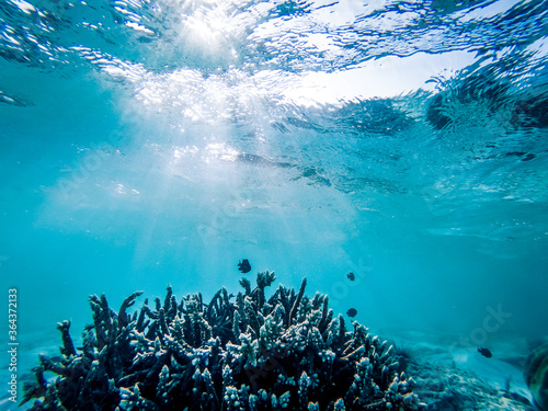 Fotografía underwater marine life on coral reefs