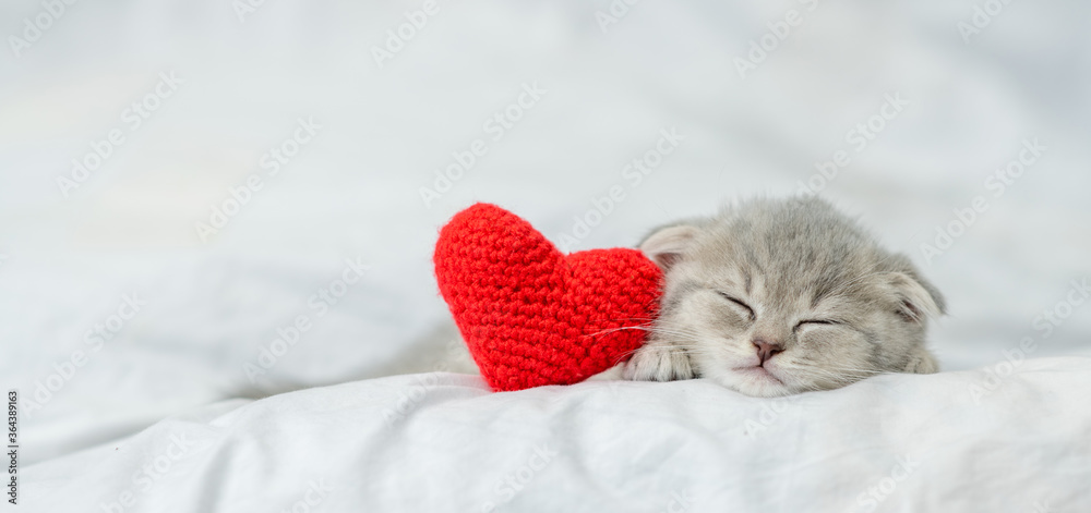 Sleepy kitten lies with red heart on a bed under blanket. Valentines day concept. Empty space for text