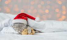 Baby Kitten Sleeping In Red Ch...