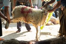 Goats As Sacrificial Animals H...