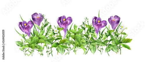 Crocus flowers, green grass. Horizontal floral banner. Watercolor Fotobehang
