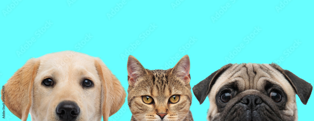 3 animals standing, looking at camera and hiding their face