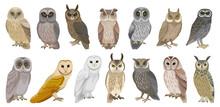 Owl Bird Cartoon Vector Set Illustration Of Icon. .Vector Set Icon Of Animal Owl. Isolated Cartoon Collection Illustration Of Bird On White Background.