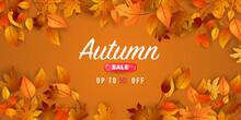 Autumn Sale Falling Leaves Bac...