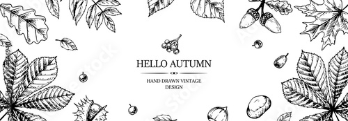 Fototapeta Hand drawn autumn horizontal banner with falling leaves, acorn and berries. Vector illustration in sketch style isolated on white. Space for text obraz