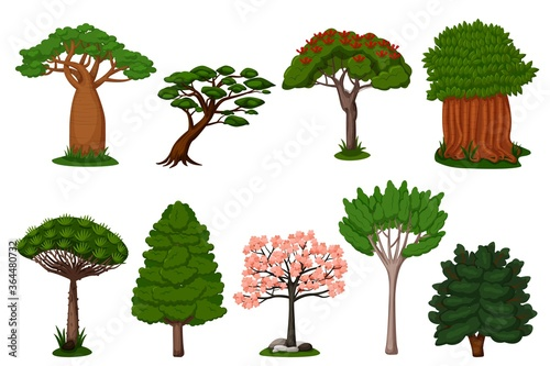 Fototapeta Summer trees set. Isolated dragon, baobab, sakura tree plant icon collection. Vector exotic summer natural flora trees of Africa illustration obraz
