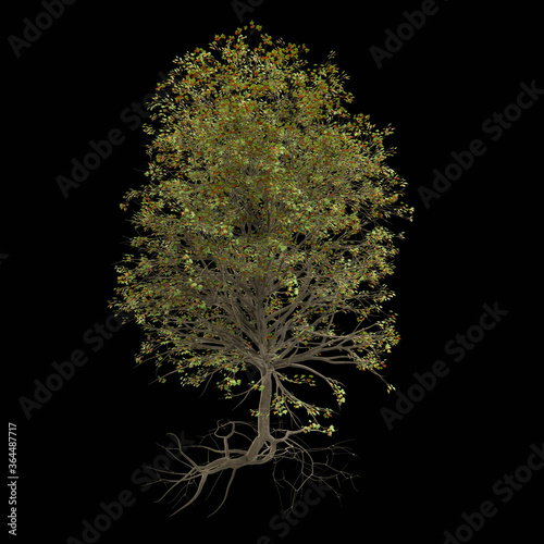 Fotografie, Tablou happy tree with lots of leaves and roots (3d nature render isolated on a black b