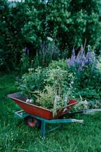 Wheelbarrow Full Of Plants In ...