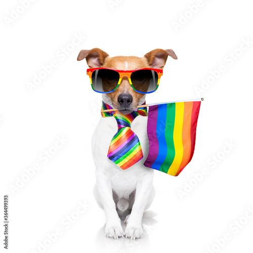 Fototapety, obrazy: gay pride dog with rainbow flag