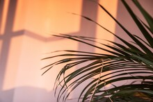 Tropical Palm Leaves Against The Pink Wall On A Sunny Day