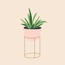 Yucca Plant In Ceramic Flowerp...