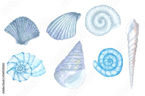Fotografering Hand-painted watercolor blue seashell illustrations
