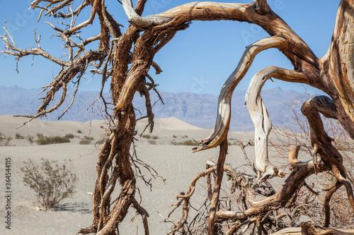 Valokuva arbol seco en desierto del death valley