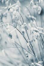 High Angle Of Black And White Backdrop With Frosted Shrubs And Grass On Glade In Nature In Wintertime