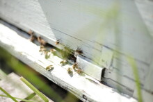Beehives In Apiary With Bees, ...
