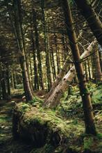 Trunks Of Dead Trees Fallen In...