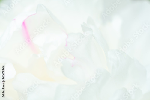 Cuadros en Lienzo Abstract white flowers background