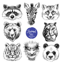 Hand Drawn Sketch Animal Heads Vector Illustration. Isolated Cute Trendy Portraits Of Fox, Raccoon, Zebra, Hippo, Panda, Ostrich, Tiger, Bear On White Background