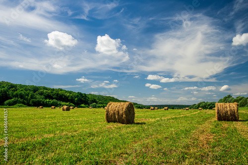 Fototapeta Scenic view at beautiful hay stacks in a green shiny field with green grass, deep blue cloudy sky , trees and country road, leading far away, summer valley landscape obraz