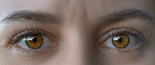 Bright Brown Eyes Of A Girl. P...