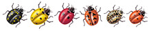 Set Of Insects - Ladybugs Of D...