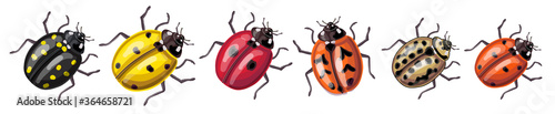 Photo Set of insects - ladybugs of different colors and species: yellow, red, orange, black, cream