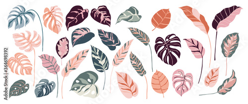 Obraz Tropical leaves and abstract exotic plan vector design elements on the white background. - fototapety do salonu