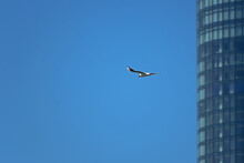 On A Sunny Day, A Seagull Flies Past A High-rise Building Standing On The River Bank.