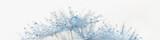 Fototapeta Dmuchawce - Beautiful dew drops on dandelion seed macro. Beautiful soft light background. Water drops on parachutes dandelion. Copy space. soft focus on water droplets. Macro nature. banner