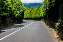 Una Carretera Entre Arboles