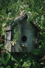 Old Wooden Bird House