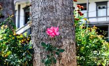 Una Flor De Grandes Hojas