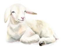 Watercolor Illustration Lamb, Easter Image, Portrait Goat