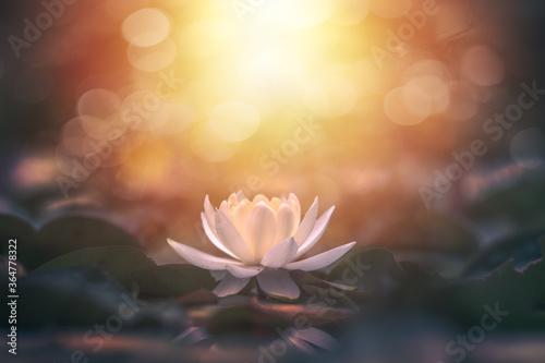 do-sypialni-bialy-kwiat-lotosu-w-wodzie-ze