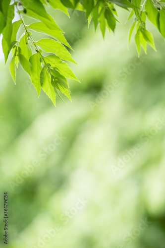 Fototapety, obrazy: Closeup beautiful attractive nature view of green leaf on blurred greenery background in garden with copy space using as background natural green plants landscape, ecology, fresh wallpaper concept.