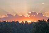 Wschodzące słońce nad linią drzew