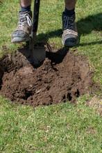 Gärtner Hebt Ein Loch Für Ei...