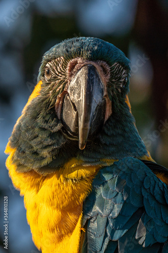 Fotografiet Portrait colorful Macaw parrot on a branch