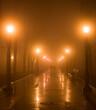 Couple park fog night Kiev