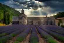 Lavender Field At Senanque Abb...