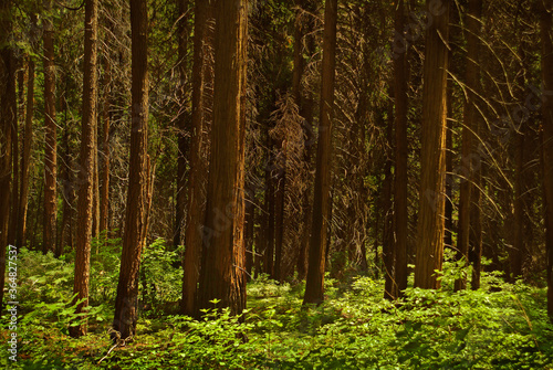 USA, Michigan, Trees in forest - 364827537