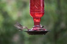 Beautiful Hummingbird Enjoying...