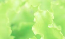 Abstract Sunny Green Floral Ba...