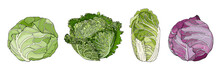 Headed Types Of Cabbage
