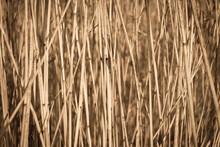 Cattail Straw Grass Background.  Fall Texture Close Up.