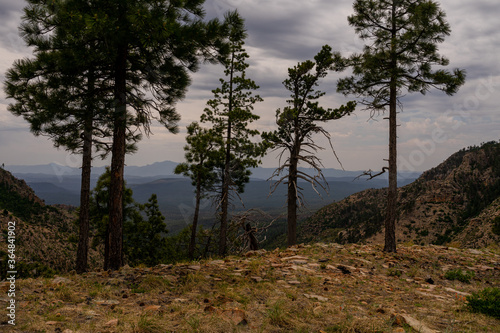 Fototapeta This is a view of the valley below, from FR 300 in the Mogollon Rim, I am standing on the grassy edge of the Rim with trees close to the edge. obraz na płótnie