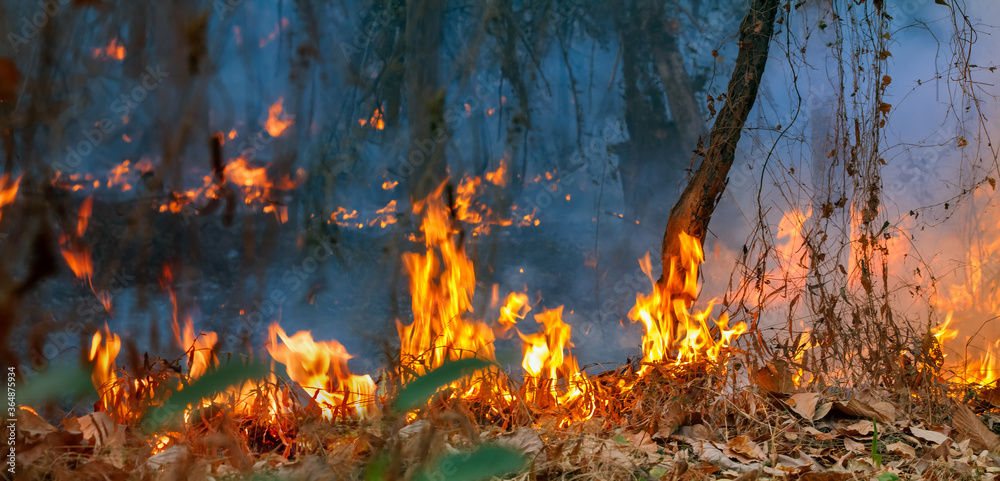 Fototapeta Rain forest fire disaster is burning caused by humans