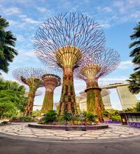 Singapore Supertrees In Garden...