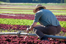 Farmer Checking The Irrigarion...