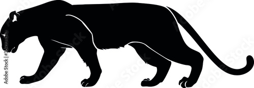 Cuadros en Lienzo Black panther. Silhouette vector isolated image.
